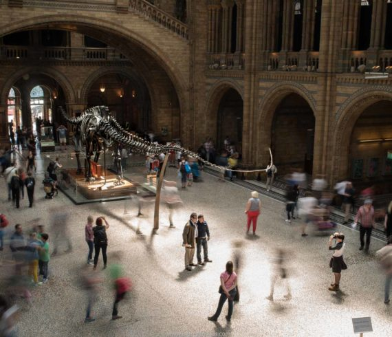dinosaur's picture, visit in National History Museum