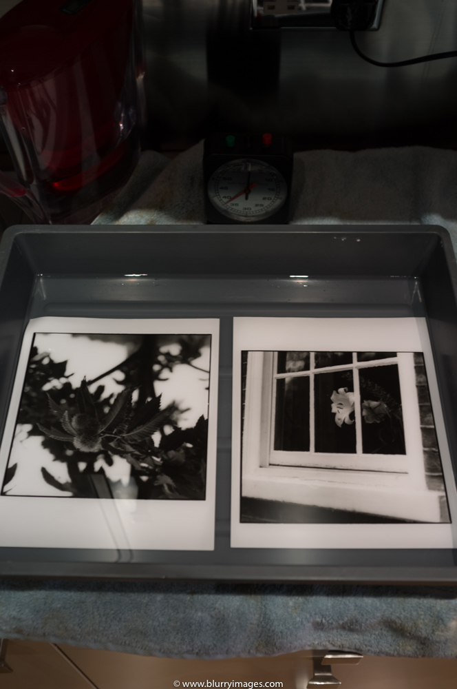 Darkroom print, white flower london