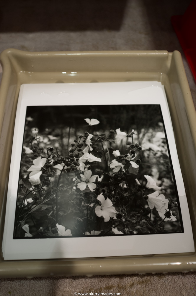darkroom prints, wthite lowers