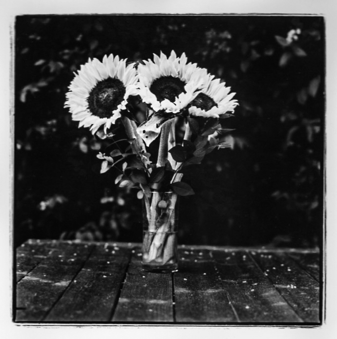 Sunflowers on the garden table.; sunflowers; Kodak tri-x 400; fine art darkroom print; new prints
